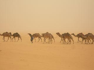 Sur la piste des caravanes de sel - Autre Mali